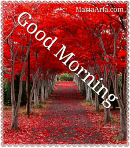 GOOD MORNING IMAGES WALLPAPER PHOTO PICTURES HD DOWNLOAD FOR FACEBOOK