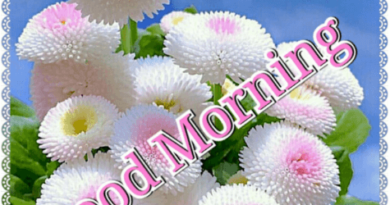 20+Best Good Morning Images-Good Morning Images With Flowers