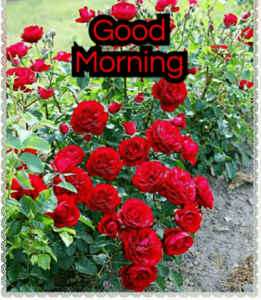 GOOD MORNING IMAGES WALLPAPER PICTURES DOWNLOAD FOR HUSBAND WIFE