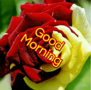 GOOD MORNING IMAGES WALLPAPER PICTURES FREE DOWNLOAD FOR FACEBOOK & WHATSAPP
