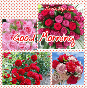 GOOD MORNING IMAGES WALLPAPER PICS PHOTO PICTURES HD DOWNLOAD
