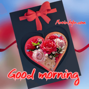 GOOD MORNING IMAGES WALLPAPER PICTURES PICS DOWNLOAD WITH RED ROSE
