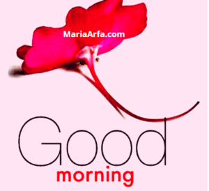 GOOD MORNING IMAGES HD DOWNLOAD FOR FACEBOOK & WHATSAPP
