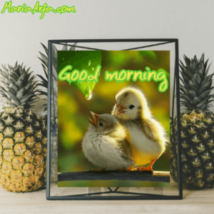 GOOD MORNING IMAGES WALLPAPER PICS PHOTO PICTURES FREE NEW HD DOWNLOAD