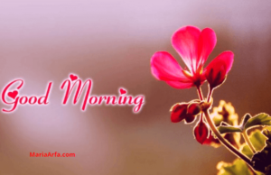 GOOD MORNING IMAGES PHOTO HD FOR WHATSAPP & FACEBOOK WITH RED ROSE