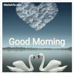 GOOD MORNING IMAGE FREE DOWNLOAD FOR PICS SHARE WITH ROMANTIC LOVER FREE NEW
