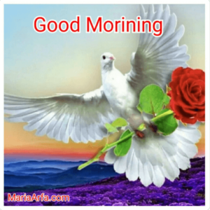 GOOD MORNING IMAGE FREE DOWNLOAD FOR WALLPAPER PICS SHARE WITH FRIEND