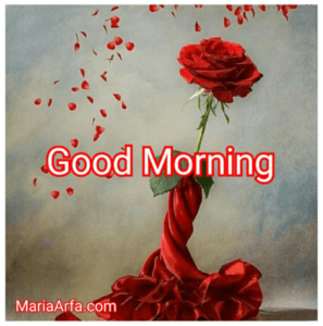GOOD MORNING IMAGE FREE DOWNLOAD WALLPAPER PICTURES PHOTO FOR WHATSAPP