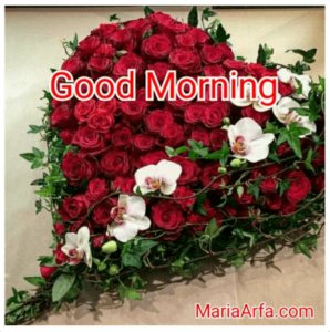 GOOD MORNING IMAGE FREE DOWNLOAD WALLPAPER PHOTO PICS FOR WHATSAPP