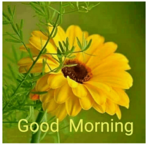 GOOD MORNING IMAGE FREE DOWNLOAD WALLPAPER PICTURES PICS PHOTO FOR WHATSAPP