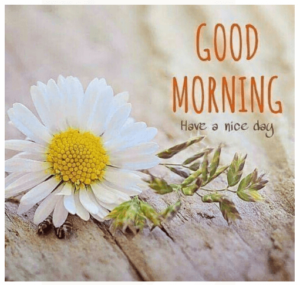 GOOD MORNING IMAGE FREE DOWNLOAD WALLPAPER PICTURES PICS HD FOR FACEBOOK