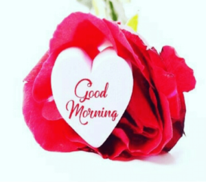 GOOD MORNING IMAGE FREE DOWNLOAD WHATSAPP & FACEBOOK WITH RED ROSE