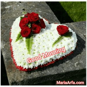 GOOD MORNING IMAGE FREE DOWNLOAD FOR WALLPAPER PICS PHOTO PICTURES